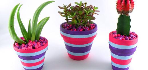 Cactus-pots-with-rocks-1