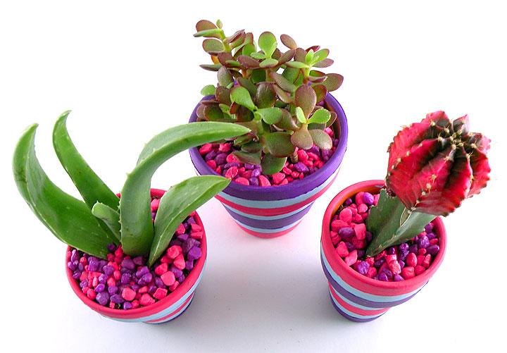 cactus-planter-rocks