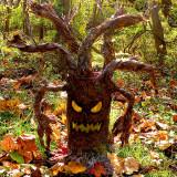 evil-tree-eyes