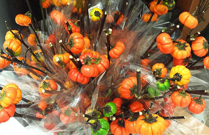 mini pumpkin tree